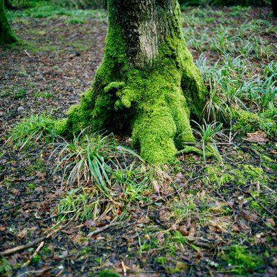 Baum Moos