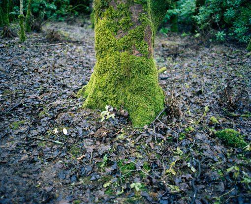 Baum im Feenwald