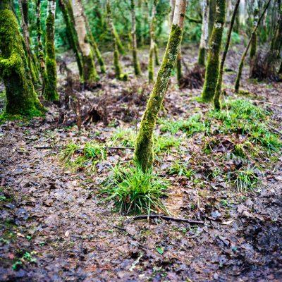 Baum im Feenwald 2