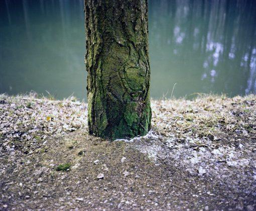 Baum vor Wasser