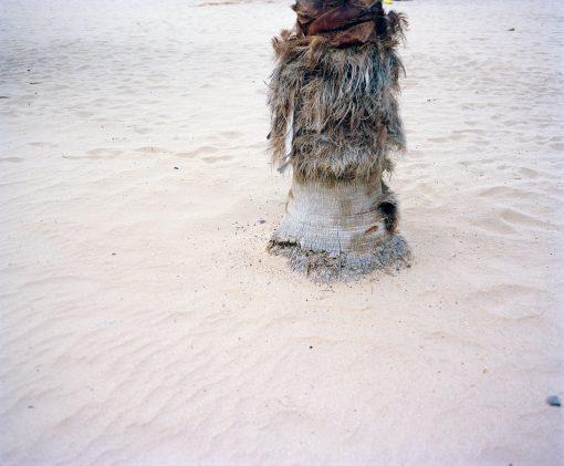 Palme Sand